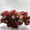 Heuchère Rouge Pot de 13 cm